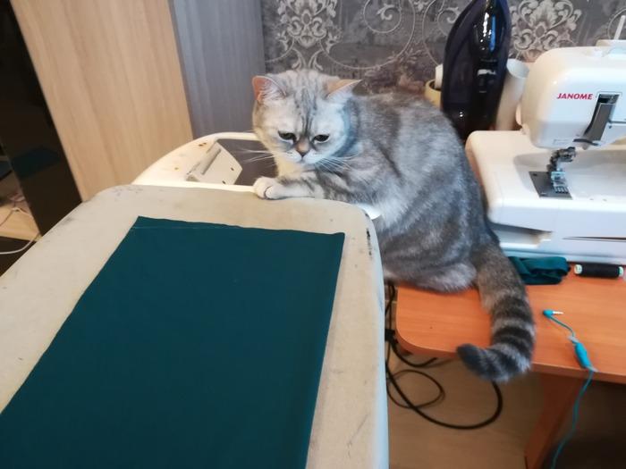Фото. Моя кошка всегда шьет со мной. Фото - ssvveettaa