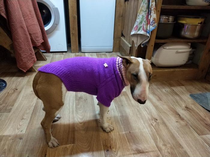 Фото. Свитер для собаки.  Автор работы - oclok