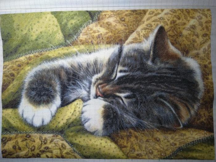 """Фото. """"Спящий котик"""". Автор работы - KatK"""