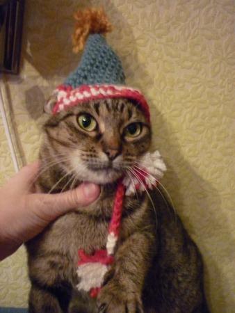 Фото. Кошке тоже нужен костюм!  Автор работы - bamia