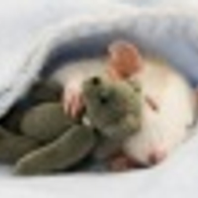 Green Mouse