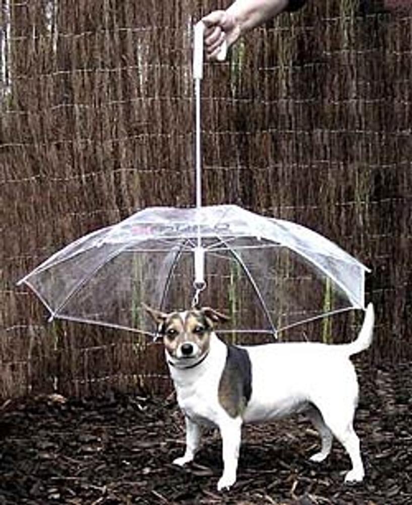Фото 12. The Dogbrella - зонт для собак.