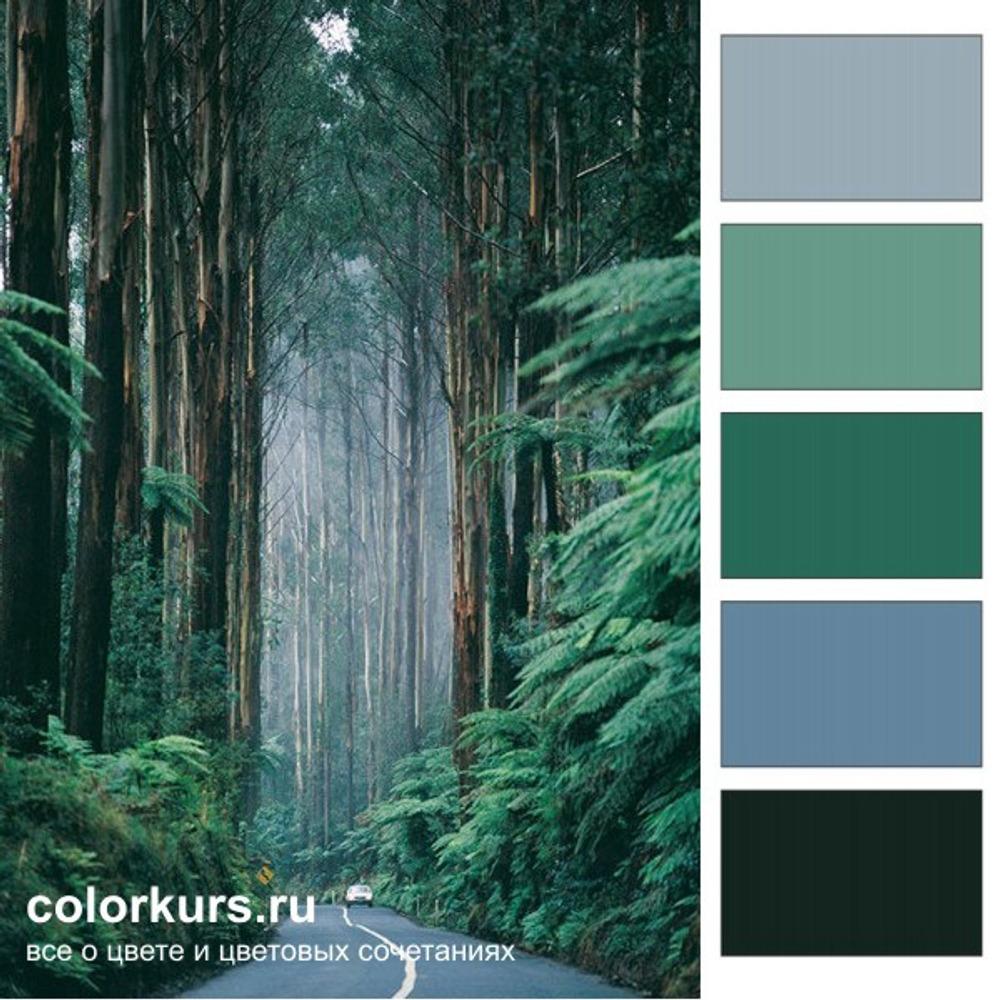 Фото. Лесная дымка - это самые лучшие цвета для интерьера комнат, требующих ясности мысли и спокойного состояния.