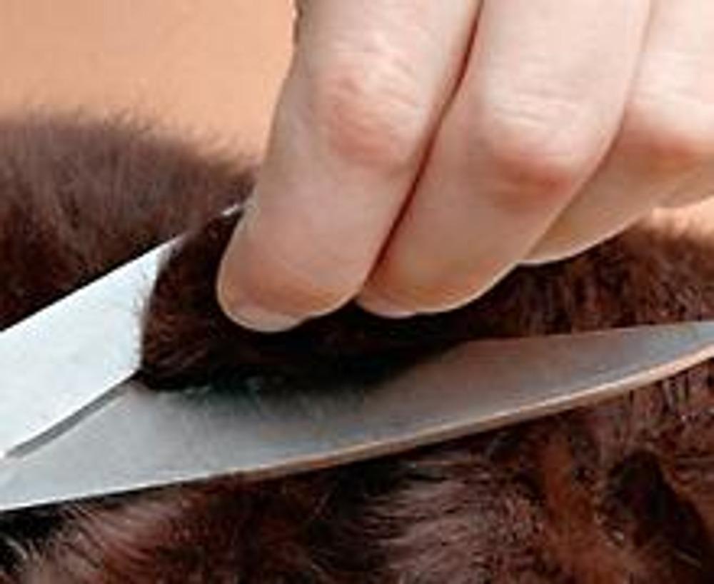 2. Отрежьте верхнюю часть берета, ориентируясь на его центр - возьмите ткань пальцами одной руки и срежьте часть ткани.