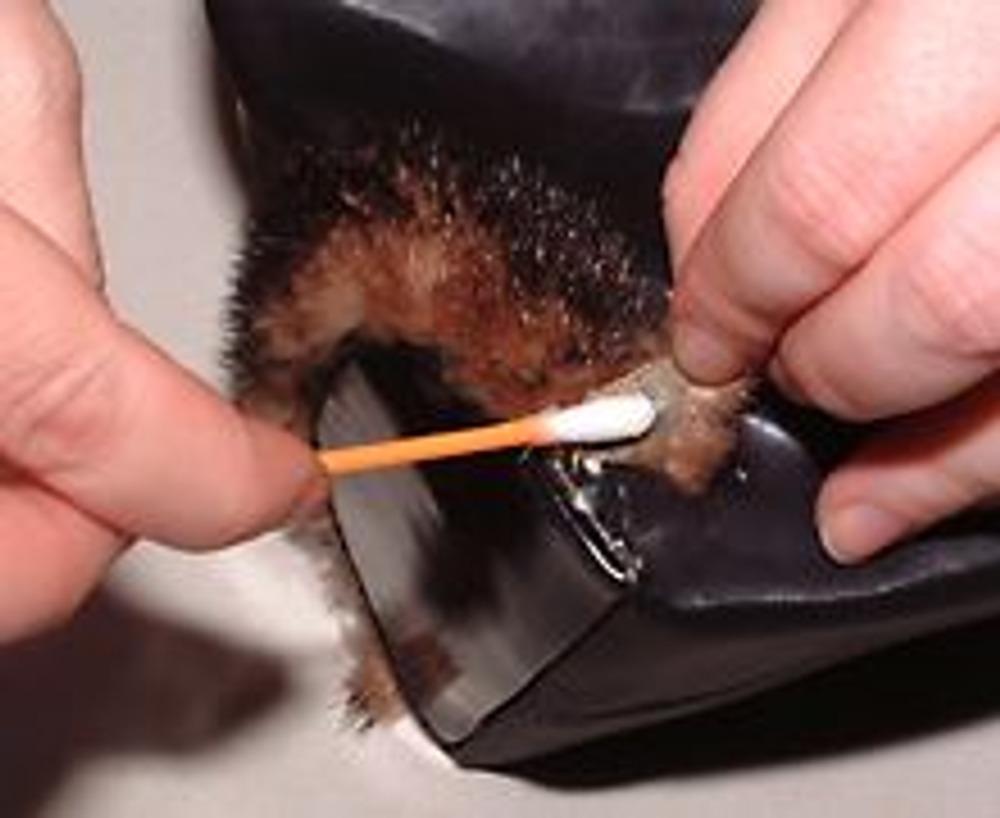 1. Описанным здесь способом можно украсить сумку или скрыть нежелательное пятно на сумке. Узкие полоски меха приклейте около донышка и ручек сумки.