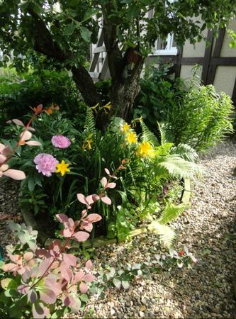 Фото. Мой маленький сад  на обычном дачном участке.