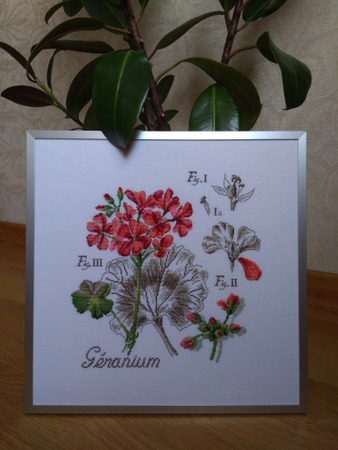 """Фото. Geranium (герань). Дизайн из серии """"Etudes de Botanique"""".  Автор работы - Luffa"""