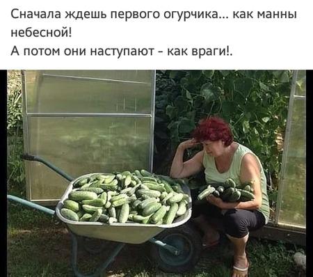 Смешные картинки про урожай огурцов