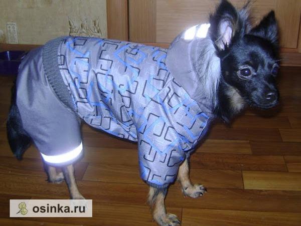 Фото. Светоотражающие элементы - обязательная деталь собачьей одежды для улицы. В такой ваш любимец будет заметен в темное время суток, особенно - на пешеходном  переходе Автор - natgri .