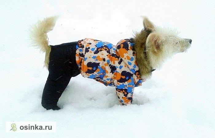 Фото. Часто собачьи наряды в точности копируют человечьи. Особенно, если шьются параллельно - куртку и брюки - ребенку, а их остатков -  комплект для собаки. Автор - lilu161009 .