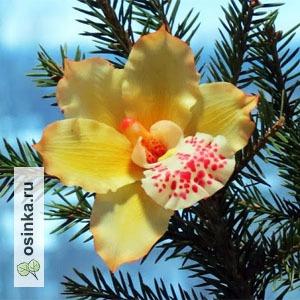 Фото. В феврале почему-то особенно мечтается о цветах. Как и автору этой зимней орхидеи - nadin-r .