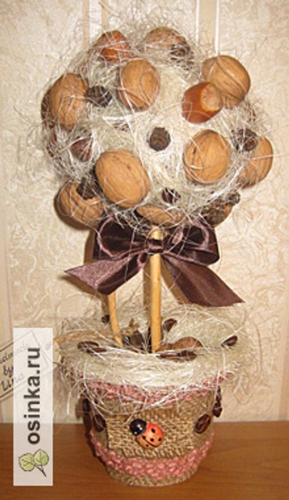 Фото. Топиарий из грецких орехов и сизаля Автор работы - Амалия Ли .