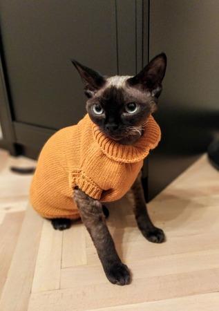 Фото. Свитер для кошки. Автор работы - Анечка-Иванечка