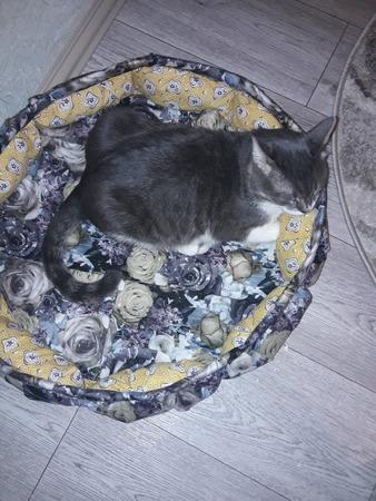 Фото. Лежанка для кота. Автор работы - Кисуля74